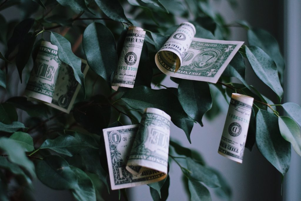 money growing on a trees concept