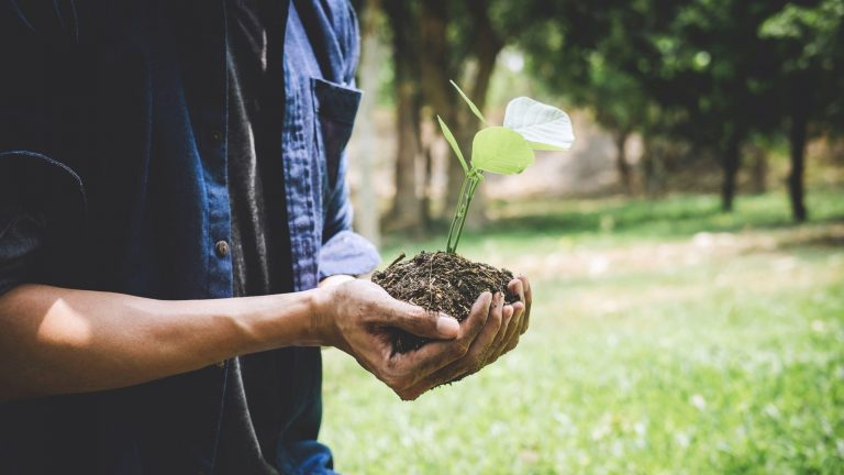 World Rainforest Day: 3 ways to make money with trees